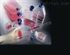 MDBK (NBL-1) 牛肾细胞