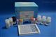 人胸肾表达趋化因子(BRAK/CXCL14)ELISA试剂盒