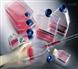 小鼠杂交瘤细胞EphA3细胞促销