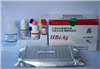 兔子孕激素/孕酮(PROG)ELISA试剂盒